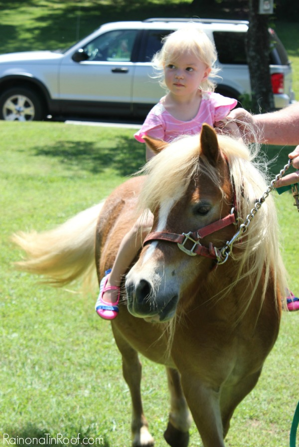 Horse Birthday Party Petting Zoo