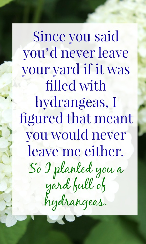 How to get a yard full of hydrangeas...