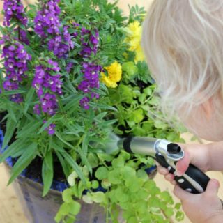 Tips and Tricks for The Perfect Container Garden