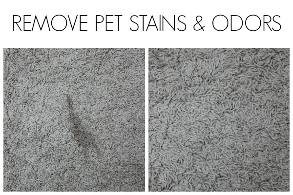 Remove Pet Stains and Odors with a Steam Machine