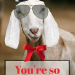 You're so GOAT, man.