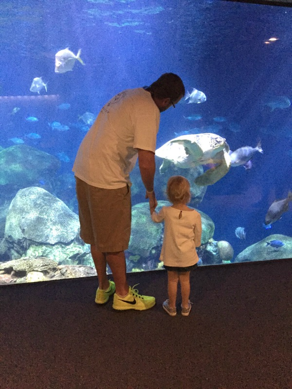 The Tennessee Aquarium: Things to Do in Chattanooga, Tennessee - a great spot for families!