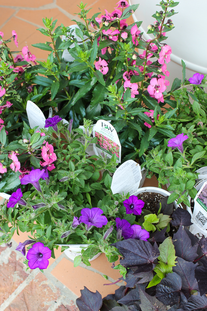 Tips for Beautiful Planters All Summer Long - choose annuals that are proven to perform well.