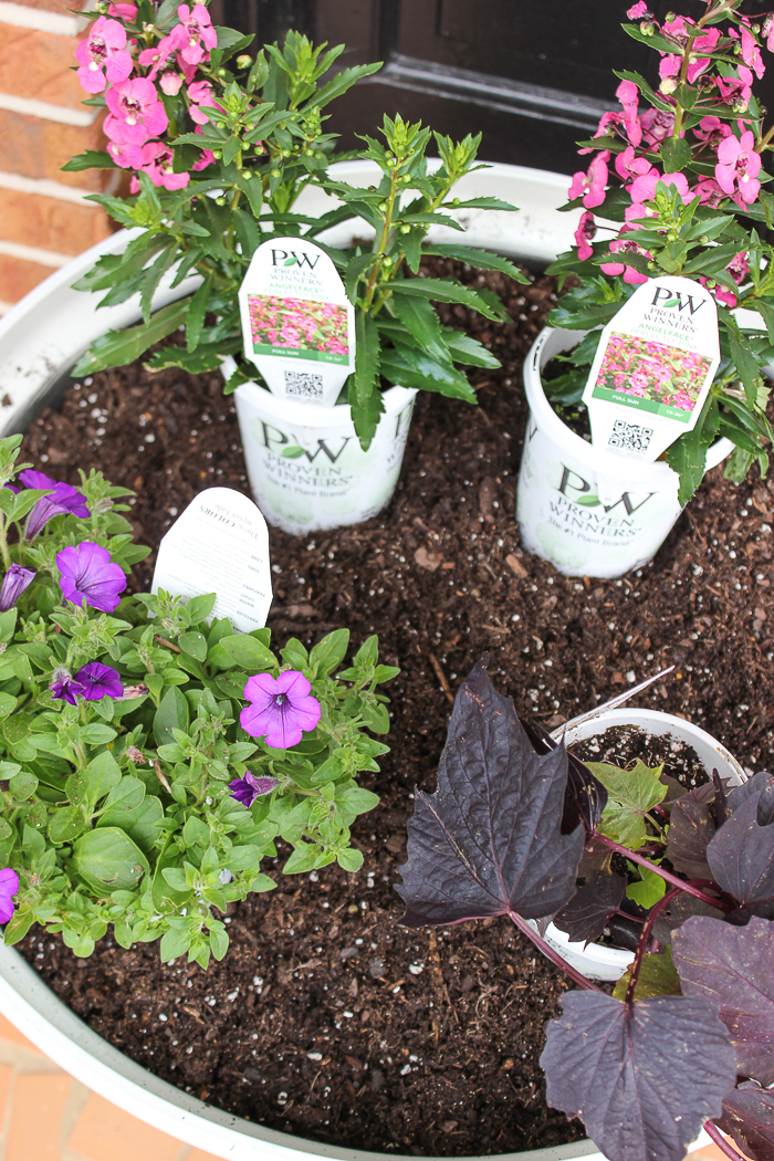 Tips for Beautiful Planters All Summer Long - arrange the annuals correctly.