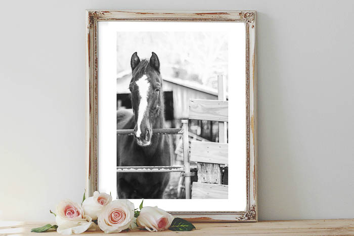 Free Printable Horse Pictures to use as affordable art for your home.