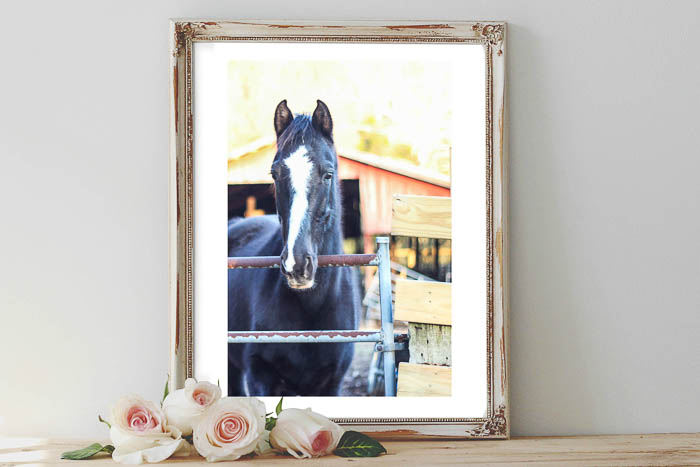 Use these printable horse pictures for free art for your home.