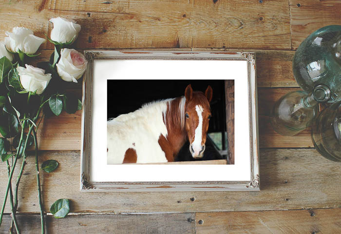 Printable wall art for your home - three horse pictures in black and white, color and watercolor.