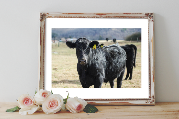 Free Printable Cow Art