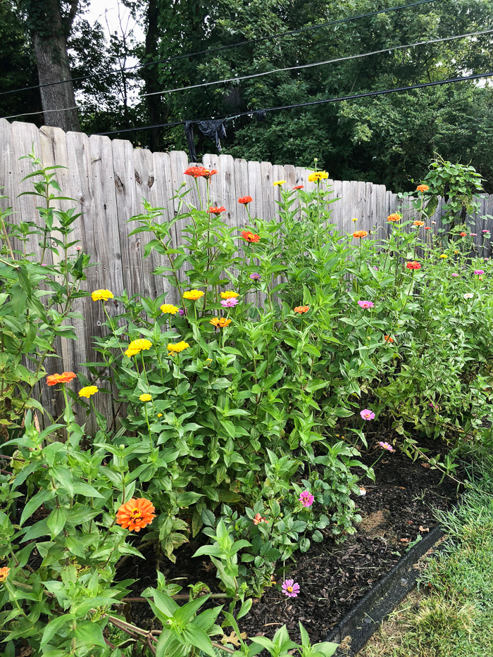how to create a cut flower garden for beginners step