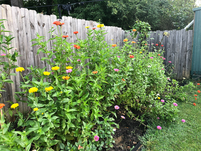 Outdoor projects you can do while you're at home - cut flower garden.